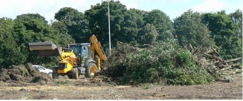 treedestruction