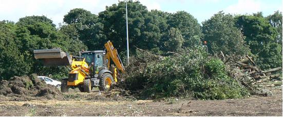tree destruction by Amey