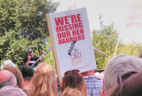 Hen Harriers protest