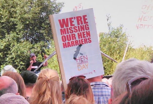 Hen Harriers protest